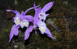 Orchids flourish in the dense forests
